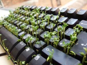 clavier graines